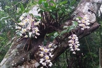 Vườn thực vật -Thiên đường dành cho những người yêu lan